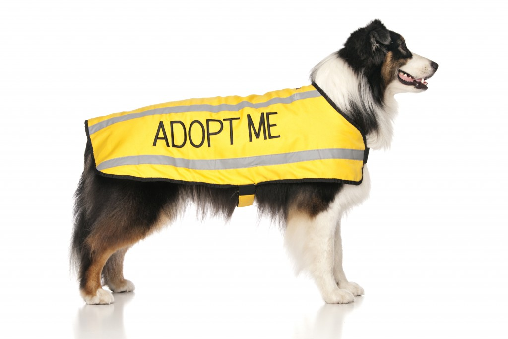 ADOPT ME, Dog Coat. Dog awareness and Safety Coat, Yellow colour coded.
