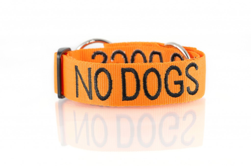 NO DOG, Dog collar Semi Choke and Buckle Collars Orange Colour Code