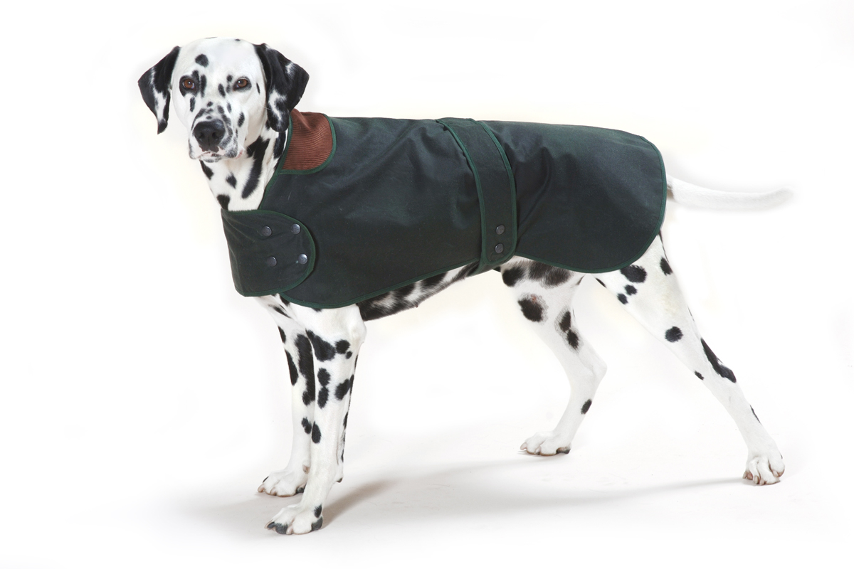 Traditional Hunter Green Waxed  Dog Coat
