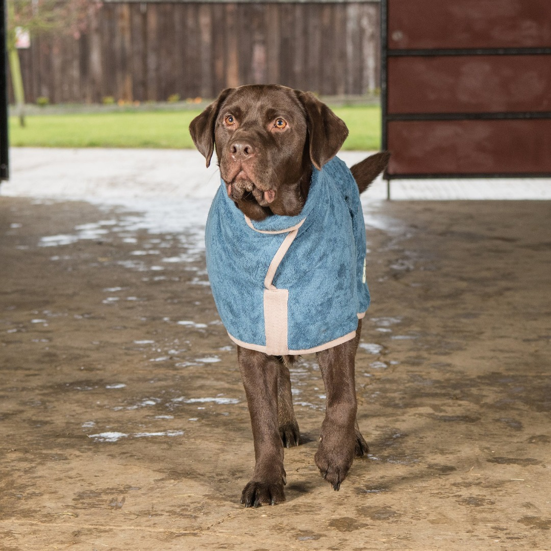 Ruff & Tuff Cotton drying coat in four colours to suit most breeds