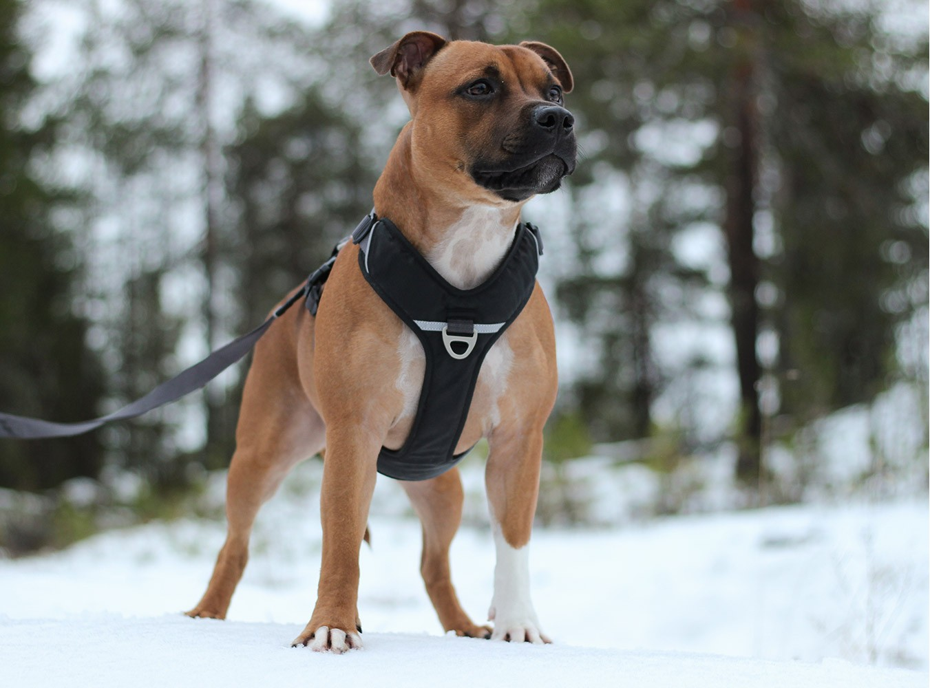 DOG Copenhagen Comfort Walk Pro  Dog Harness