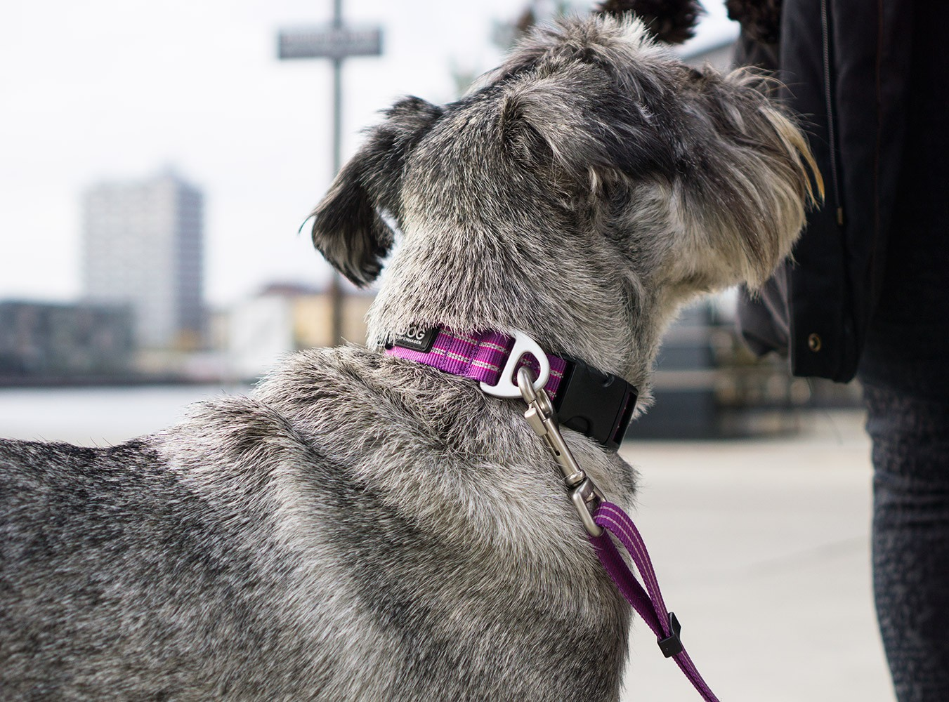 DOG Copenhagen Urban Style Dog Collar