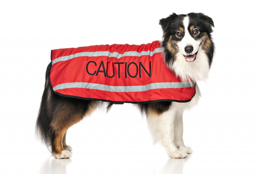 CAUTION DOG, Dog Coat. Dog awareness and Safety Coat, Red colour coded.