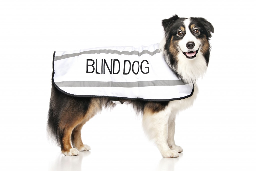 BLIND DOG, Dog Coat. Dog awareness and Safety Coat, White colour coded.