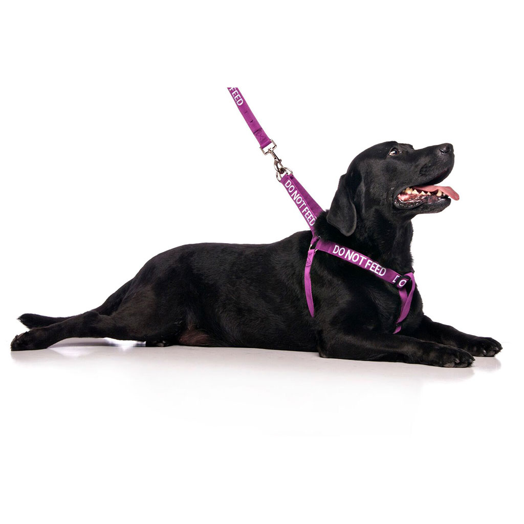 DO NOT FEED DOG,  Dog Strap Harness Purple Colour Coded