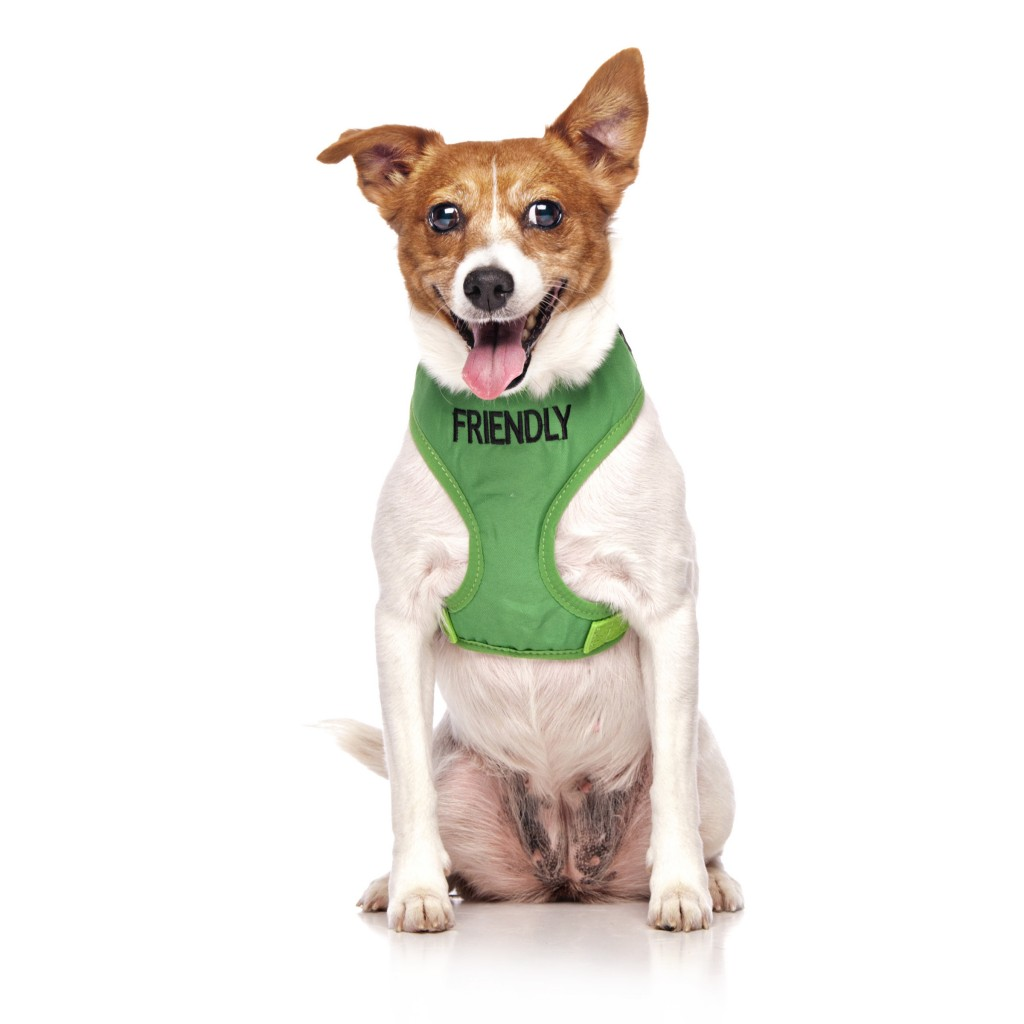 FRIENDLY DOG, Dog Vest Harness Green Colour Code