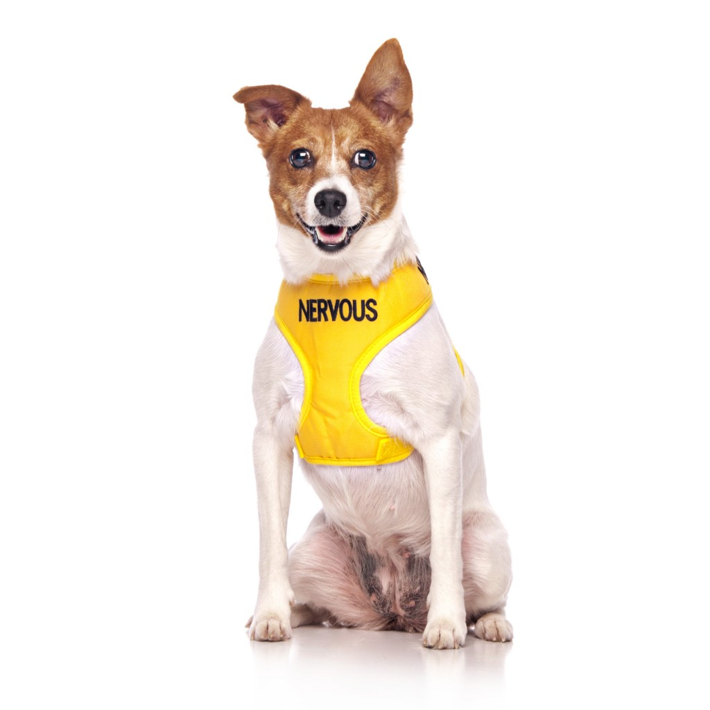 NERVOUS DOG, Dog Vest Harness Yellow Colour Code