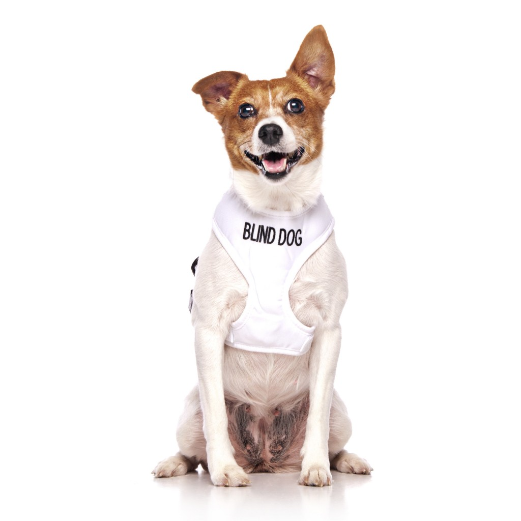 BLIND DOG, Dog Vest Harness White Colour Code