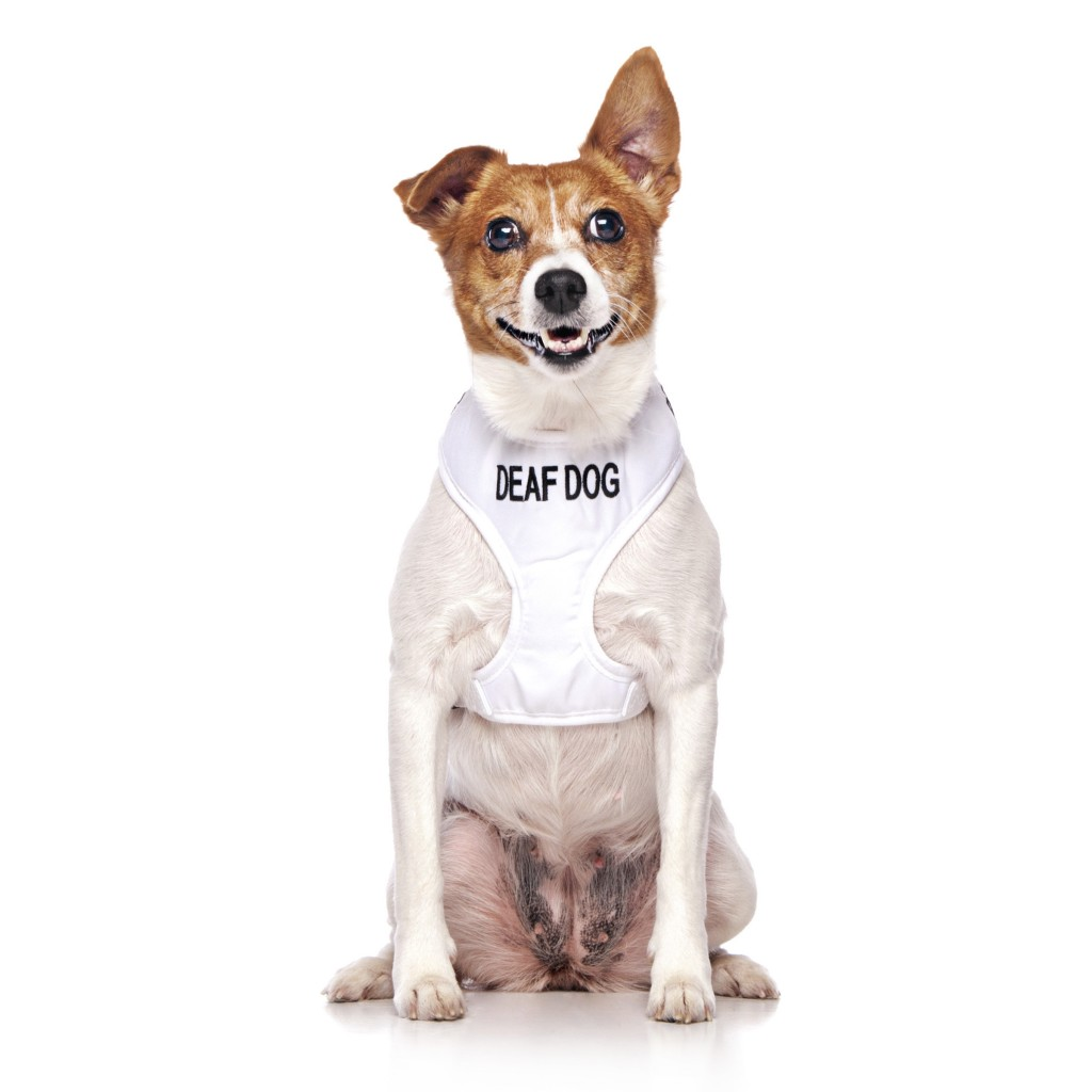 DEAF DOG, Dog Vest Harness White Colour Code