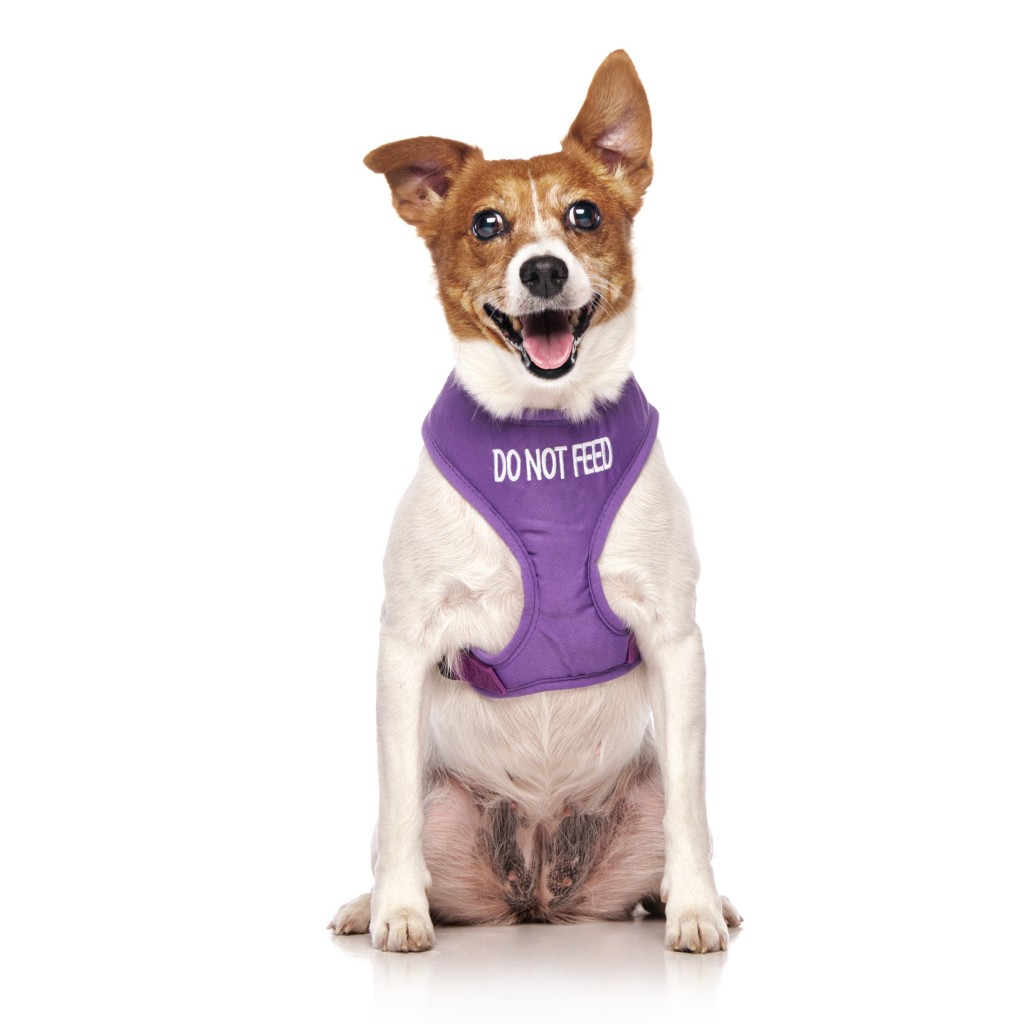 DO NOT FEED DOG, Dog Vest Harness Purple Colour Code