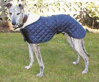Greyhound Showerproof Quilted Nylon Anorak