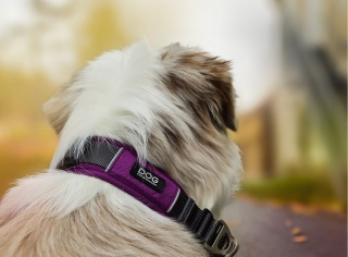 DOG Copenhagen Urban Explorer Dog Collar